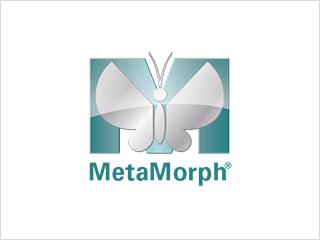 MetaMorphイメージング