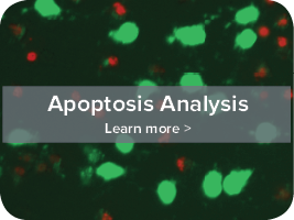 Apoptosis analysis using automated imaging