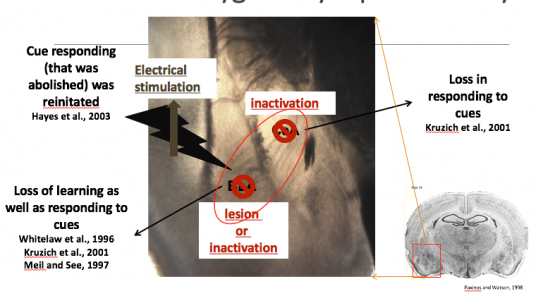 Using Electrophysiological Studies to Accelerate Mechanistic in Reception and Transmission