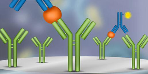 ELISA / Immunoassays