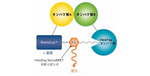 NanoBRET/BRET
